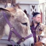 donkeyking